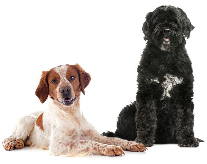 Dog Size Reference - Shows images of different sized dogs