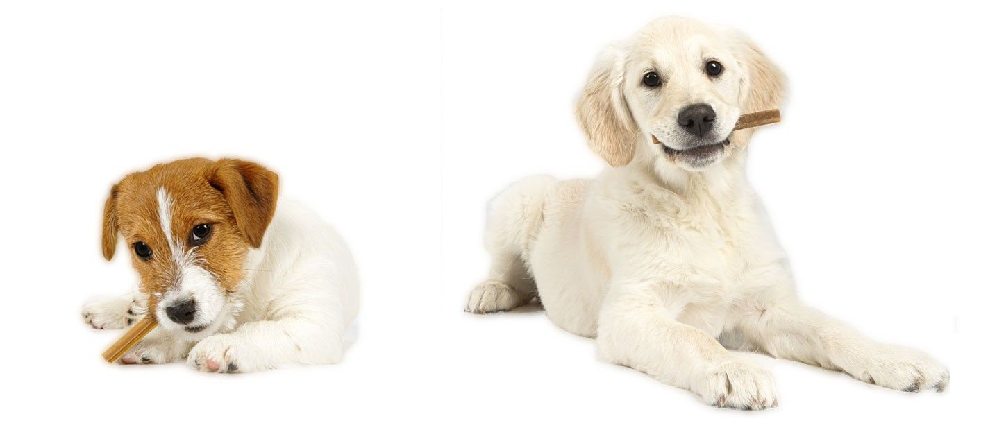 Puppy Size Reference - Shows images of different sized dogs