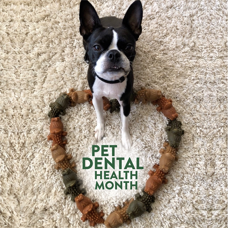 Small god standing in heart shape made of dog treats with text that states Pet Dental Health Month