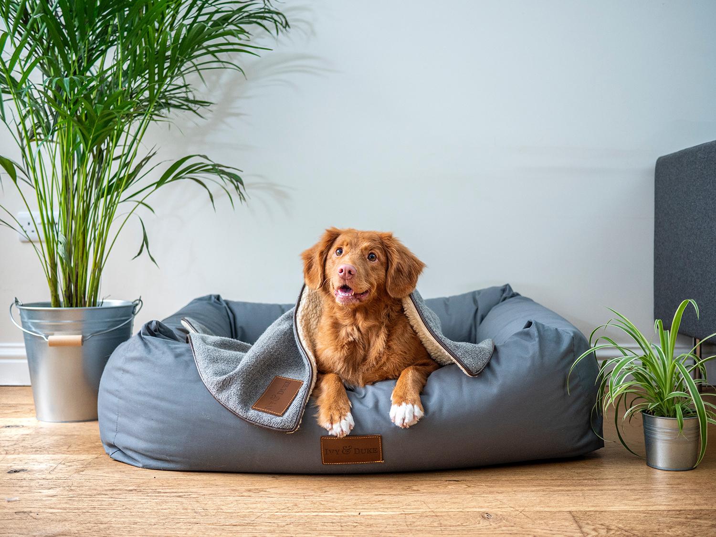 Dog laying in large dog big